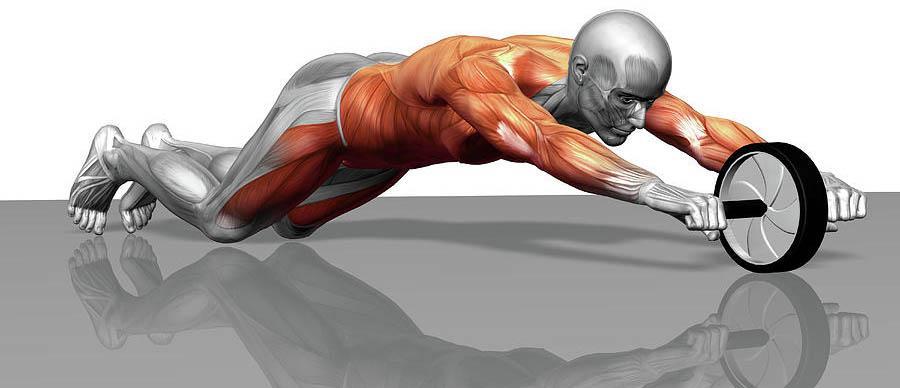 Колесо для пресса - мышцы