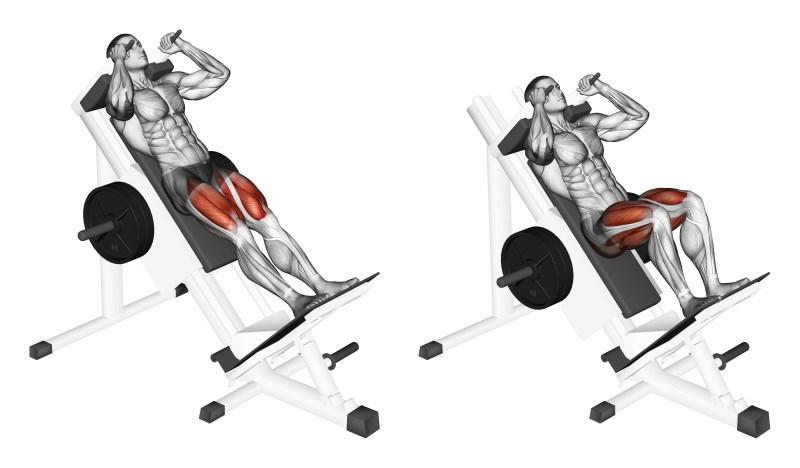 Гакк приседания - какие мышцы работают