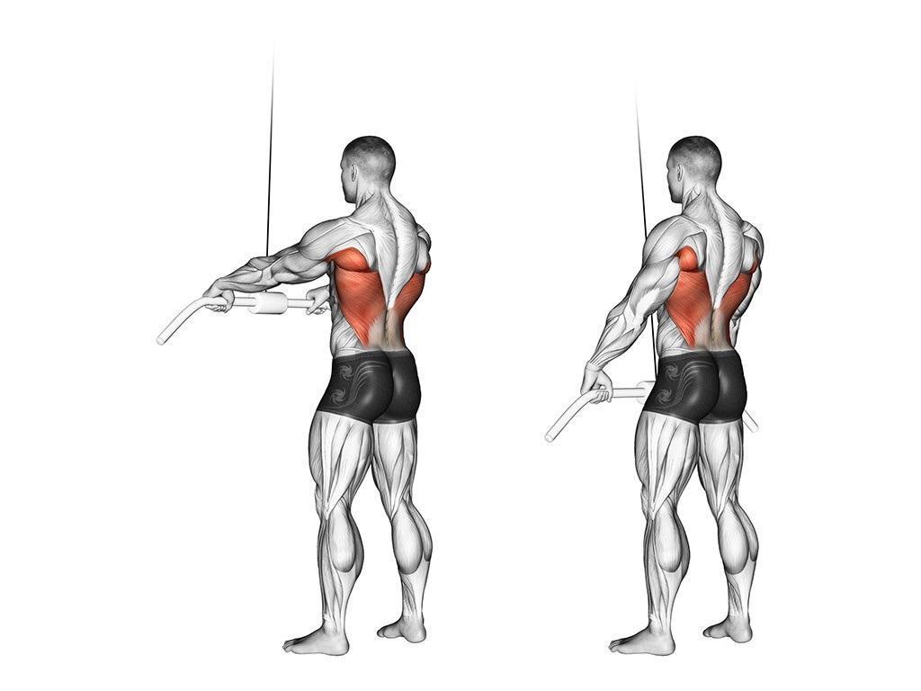 Упражнение пуловер - рабочие мышцы