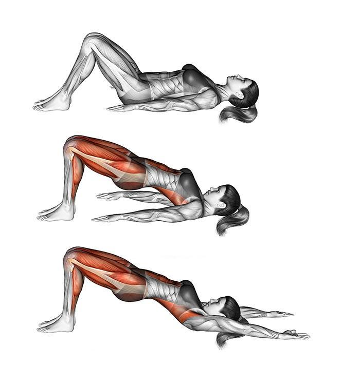 Ягодичный мостик - мышцы