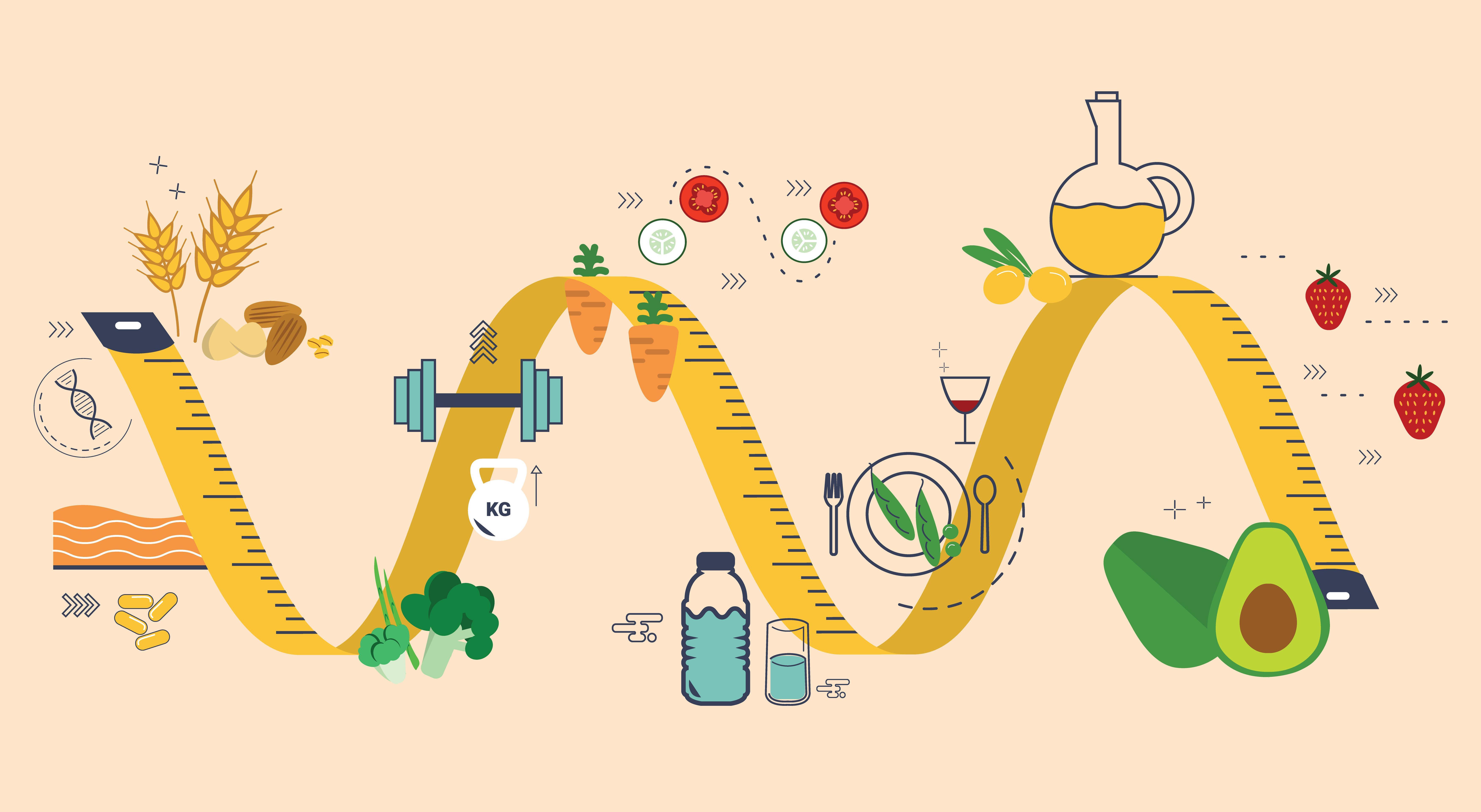 https://sportfito.ru/wp-content/uploads/2017/12/chto-takoe-metabolizm.jpg