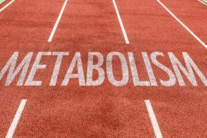 Общие сведенья про базальный метаболизм