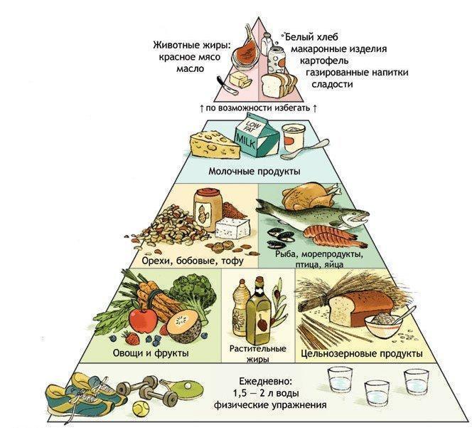 Что такое пирамида правильного питания человека