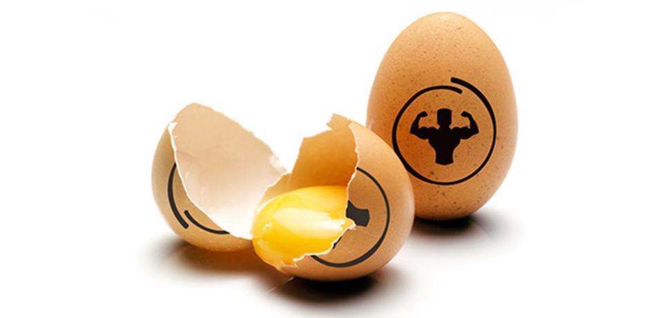 Особенности яичного протеина