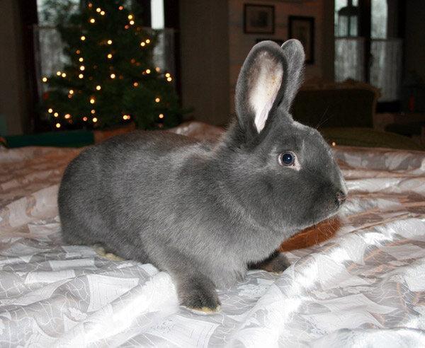 Кролик всё меньше ест, худеет без видимых причин.