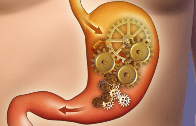 Восстановление работы органов пищеварения