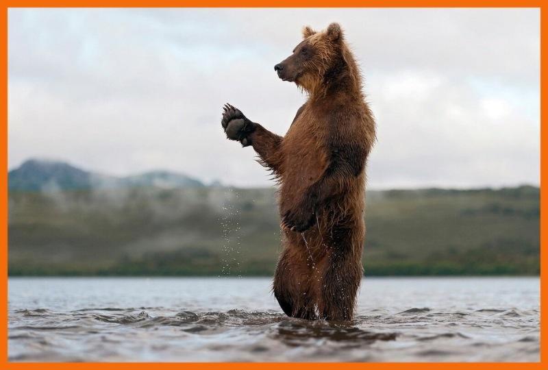 Дыхание (Сокола, Медведя, Волка, Полоза).