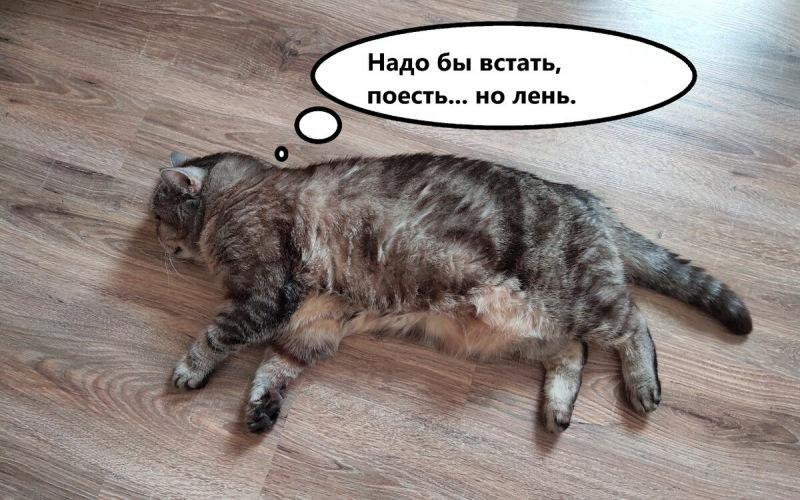 10 Советов, чтобы похудеть, для ленивых
