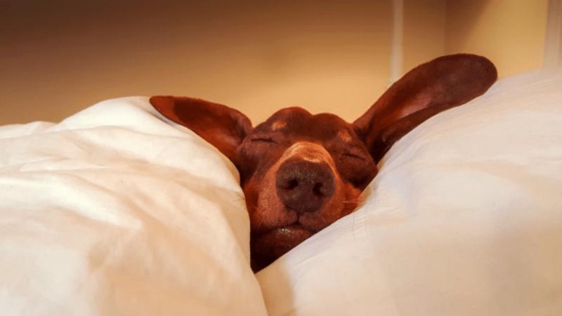 4 способа улучшить сон!