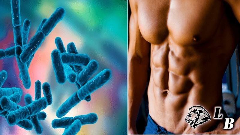 Помогут ли пробиотики сжигать жир? Научный анализ!